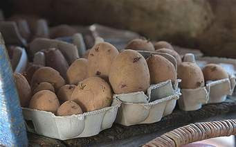 seed potatoes in stock