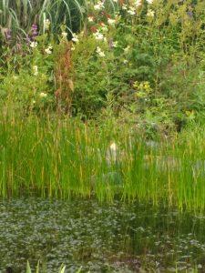 pond at woodside