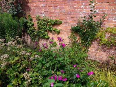Herbaceous border in the walled garden