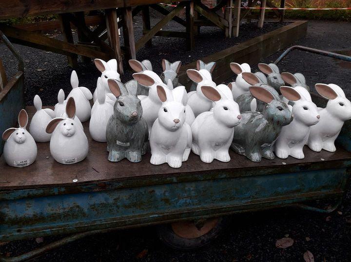 model rabbits